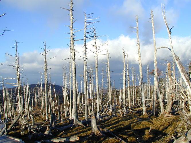 「正木ヶ原」の画像検索結果